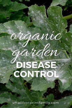 Organic Garden Disease Control