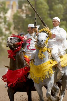 Morocco Maroc   FANTASIA !  Incredible display of horseman ship--charging down the field as a group, then shooting off rifles in unison!