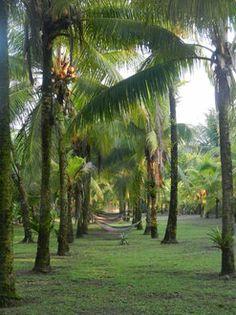 Karibikfeeling in den Hängematten - Hotel Turtle Beach Lodge im Tortuguero Nationalpark