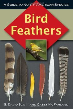 Bird Feathers: A Guide to North American Species by S. David Scott