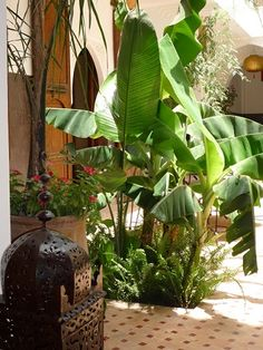 Freshness at Riad Pachavana