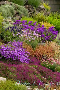 Beautiful assortment of plants at many levels -- gently slopes down the hill.