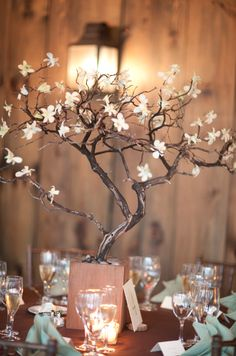 White denodrobium orchids attached to branches.  Use flowers or hanging votives.