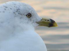 Gull Beach 10