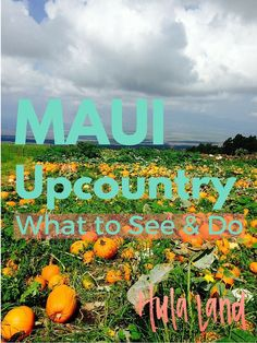 Maui Upcountry: The Best Things to See and Do