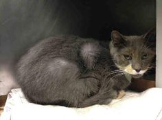 #URGENT #NYC #CATS darling KATE needs our help before 2/1-PLS RT/adopt/foster/pledge! https://www.facebook.com/PetsOnDeathRow/photos/a.576546742357162.1073741827.155925874419253/943067899038376/?type=3&theater…