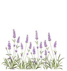 Wreath of lavender flowers vector