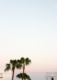 Palm trees and pastel skies from a recent trip / SWY studio
