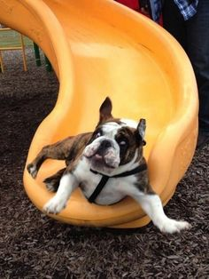 A dog who can't even handle this slide. | 41 Pictures You Need To See Before The Universe Ends