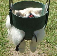 Full-swing derp. | 31 Pets Who Take Derp To A Whole New Level