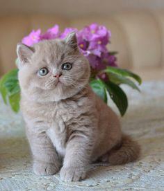 Cute cats - Cute Cats and Kittens Cute Cats And Kittens, I Love Cats, Kittens Cutest, Pretty Cats, Beautiful Cats, Animals Beautiful, Baby Kittens, Tier Fotos, Cute Baby Animals