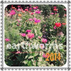 Earthworms 2014
