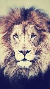 lion <3 <3