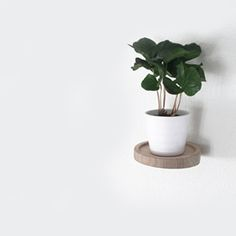 Float - Shelf by Wood Junkie