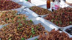 Lelystad - Crowdfunding voor insecten