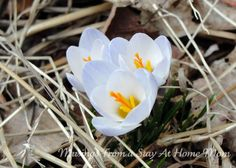 Wordless Wednesday Linky – Spring Has Sprung!