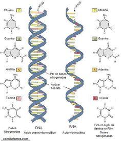Acidos nucleicos!  http://camilalemos.com/wp-content/uploads/2009/02/dna-15.jpg