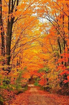 The epitome of fall foliage.A country road wanders away into a tunnel of autumn trees. This image was captured in northern Michigan near Cadillac, Michigan, USA. Beautiful Places, Beautiful Pictures, Trees Beautiful, Autumn Scenes, Seasons Of The Year, All Nature, Fall Pictures, Pictures Of Trees, Belle Photo