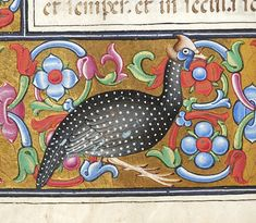 Guinea Fowl   Book of Hours   Italy, Lombardy   ca. 1475-1500   The Morgan Library & Museum