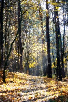 Autumn in the forest. Warmia, Poland.   Flickr - Photo Sharing!