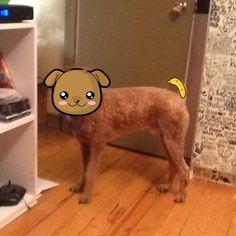 My Dog gone kawaii