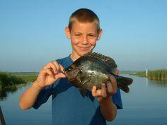 Orlando Blue Gill Fishing | Fishing Charters Inc Fishing Charters, Freshwater Fish, Bass Fishing, Fresh Water, Orlando, Florida, Blue, Orlando Florida, The Florida