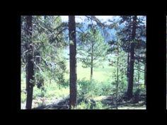 David Whitfield sings Cara Mia - 1954