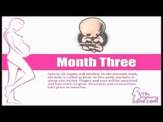 Pregnancy Calendar - A guide to conception at the birth of your baby - Pregnan. - Pregnancy Calendar – A guide to conception at the birth of your baby – Pregnancy Videos – # - Birth Calendar, Pregnancy Calendar, Pregnancy Videos, Baby Pregnancy, Pregnancy Development, Pregnancy Calculator, Baby Birth, Save Image, Conception