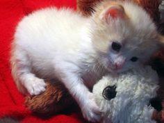 orphan kitten then now growing