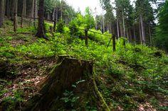 Hiking Bohemian Switzerland National Park