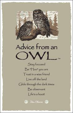 Advice from an Owl Frameable Art Postcard