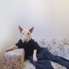 Just Chillin' - Artist Photographs His Adorable Bull Terrier Jimmy in Creative, Fun and Silly Situations