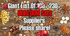 Recommendations for more heirloom seed companies to add have been pouring in. We started with 40 but now have over 230 heirloom seed suppliers from all around the world - and the sheer diversity of undiscovered plant varieties we now link to is turning this page into a real treasure trove! ... [read more]
