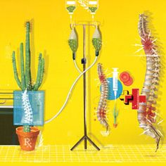 Prickly Painkiller: Scientific American