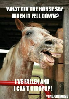 Horse Puns - funniest memes in the Stud Horse puns are best for horse lovers and for those who like horses, jokes, memes, funny pictures and puns. Just check this funny gallery. Horse Puns, Funny Horse Memes, Funny Horse Pictures, Funny Horses, Funny Animal Quotes, Cute Horses, Animal Jokes, Funny Puns, Funny Animals