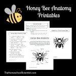 Honeybee Unit Study
