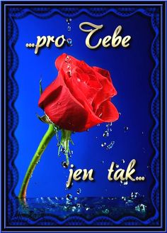 Pro Tebe Good Morning, Illustration Art, Neon Signs, Happy, Flowers, Facebook, Humor, Motto, Owl