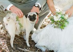 Wedding pug. How I wish we had our pug with us at our wedding! Maybe vow renewal?