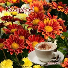 Good Morning, Greek, Tableware, Buen Dia, Dinnerware, Bonjour, Tablewares, Dishes, Place Settings