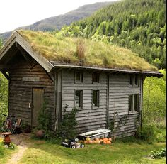 green roofed cabin