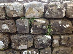 Roman stonework Housesteads Roman Fort. NE47 6NN near Bardon Mill. Northumberland UK 5/9/16
