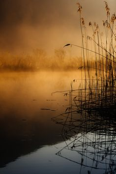 early in the morning by  Andreas Schuller