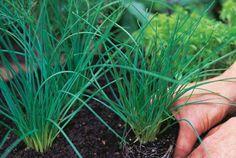 Fűszerek a polcainkon Plants, Plant, Planets