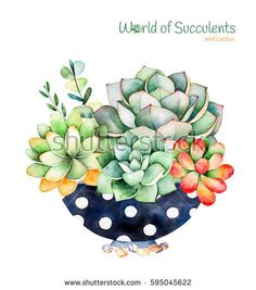 Watercolor hand-painted succulent plant in painted pot and cactus flowers. - Watercolor hand-painted succulent plant in painted pot and cactus flowers. Stock Illustration – i - Succulents Drawing, Watercolor Succulents, Planting Succulents, Watercolor Flowers, Watercolor Paintings, Watercolor Illustration, Succulents Art, Cactus Painting, Plant Painting