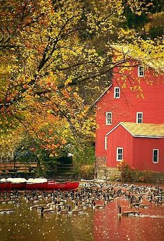 #Autumn In New England Love New England in the Fall.