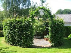 Whilst ancient around idea, the pergola is having a modern-day rebirth these kinds of days. Permaculture, Garden Structures, Outdoor Structures, Backyard House, Garden Cottage, Garden Beds, Small Space Gardening, Stone Island, Trees And Shrubs