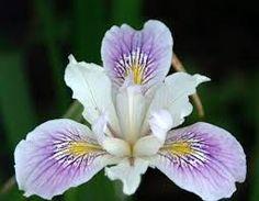 Resultado de imagen para variedades de flores