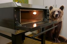 A bear of an oven, an IME electric stone oven, hearth, manual steam injection Bread Oven, Bread Baking, Small Restaurants, Hearth, Bakery, Restaurant Ideas, Stone, Manual, Kitchen Ideas