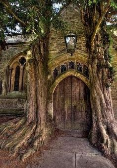 Amazing doorway - the trees look like they have been here for ever. Very Middle Earth don't you think?