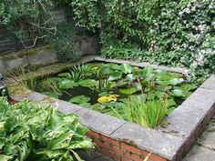 The raised lily pond